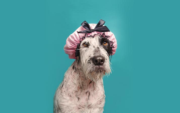 Dog-Shampoos