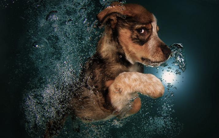 Dog-pools