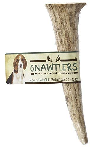Pet Parents Gnawers - Premium Elk Antlers for Dogs, Naturally Shed Elk Antlers, All Natural Elk Antler Chews, Specially Selected from The Rocky Mountain & Heartland Regions - Elk Antlers for Dogs